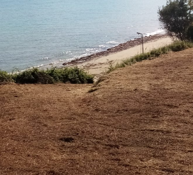 Frond sea land 2.048 in Astrakeri beach, Corfu - Greece