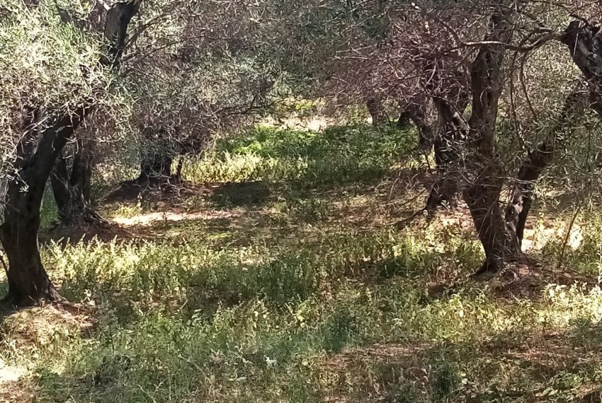 Land in Agios Andeas 4568,71